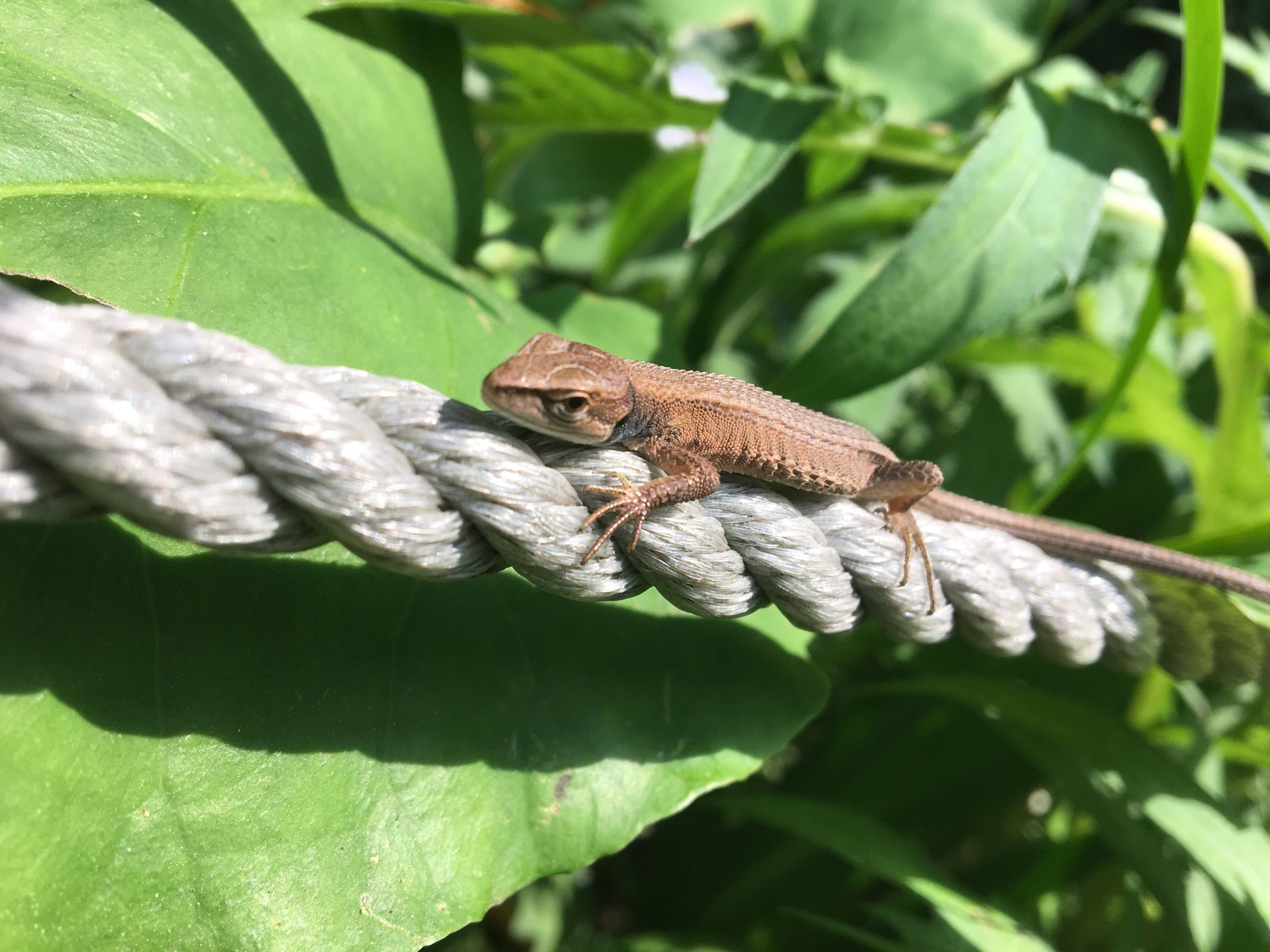 one animal, animals in the wild, leaf, animal themes, nature, green color, animal wildlife, day, outdoors, no people, growth, plant, tree, beauty in nature, close-up, reptile, branch