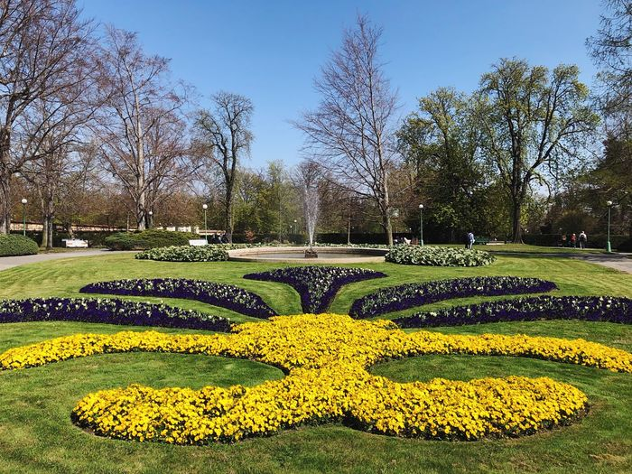 Park in Praha Plant Tree Growth Nature Yellow Flower Park Park - Man Made Space Freshness No People Beauty In Nature Outdoors Day Flowering Plant Clear Sky Green Color Garden Sunlight Grass Sky