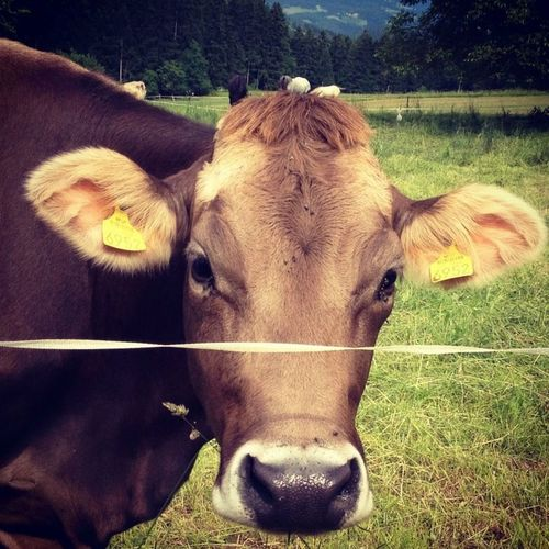 Service Animals Slovenia Muuu🐄 WeLoveNature  ❤️