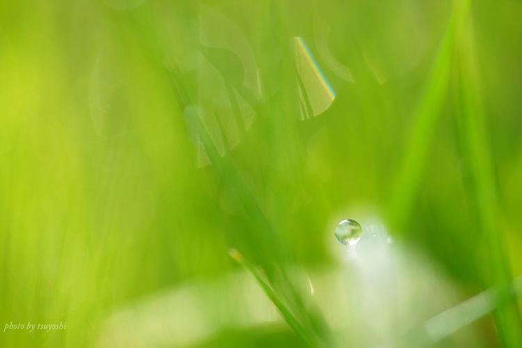 Sony α♡Love しずくふぇち Plants 🌱 Water Drops Hello World キラキラ EyeEm Nature Lover Macro Photography Bokeh Photography The Purist (no Edit, No Filter)