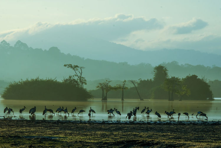 View of birds on field by lake