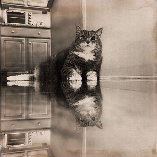 Mobilephotography Hipstamatic Cat Pets Domestic Cat Portrait