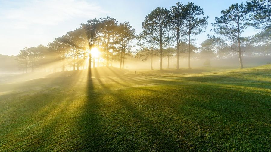 Sunlight streaming through trees on field against sky