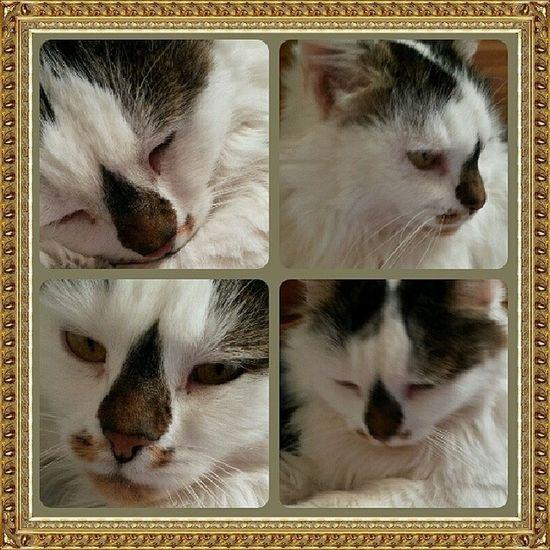 Endlich mal wieder kuscheln... ♥ Katzenliebe Mude Langer Tag katze liebe