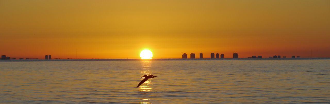 Sunrise above Fort Myers Florida Sonnenaufgang Sunrise Fort Myers In Background Sanibel Beach Sanibel Island Pelikan Pelican Pelicans In Flight Sun Sea Water Silhouette Waterfront Leisure Activity