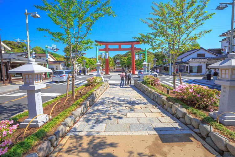 After Torii gate begins the Dankazura, a pathway flanked by cherry trees leading to Tsurugaoka Hachiman shinto sanctuary in Kamakura, Japan. Wakamiya-oji street offers spectacular landscapes in spring Kamakura, Japan - April 23, 2017: Komachi-dori Street, the shopping street outside Kamakura station. The popular touristic street is in ancient city of Kamakura with historic restaurants and stores. Dankazura Japan Japan Photography Japanese  Japanese Culture Japanese Temple Kamakura Kamakura Daibutsu Kamakura Japan Kamakura Station Path Road Shrine Shrine Of Japan Shrines & Temples Shrines And Temples Statue Wakamiya-Oji WakamiyaOji Architectural Column Architecture Building Building Exterior Built Structure Day Direction Footpath Growth House Incidental People Kamakura Sea Nature Outdoors Pathway Plant Real People Rear View Shadow Sky Street Sunlight Temple The Way Forward Tree Wakamiya