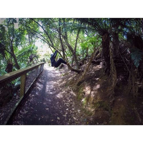 🐒 Jungle Forest Monkey Letmegobackplease Tasmania Green Nature Fun Gopro