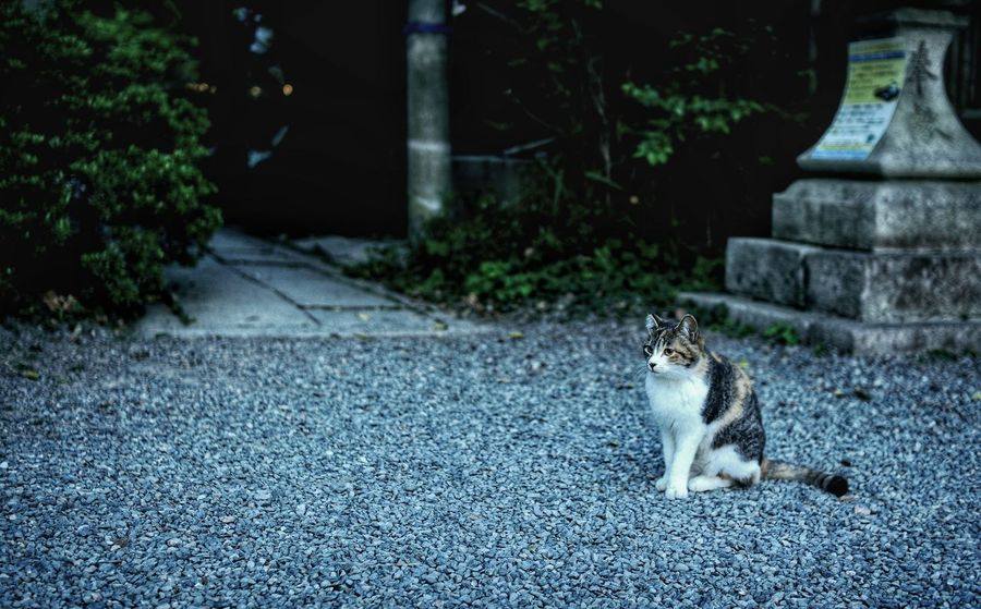 2016 EyeEm Awards Cat The Street Photographer - 2016 EyeEm Awards Japanese Shrine Japanese Cat Cat♡ Japan EyeEm Best Shots Kyoto,japan Kyoto EyeEm Gallery EyeEm Showcase June