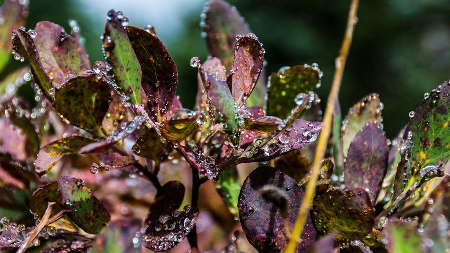Close-Up Of Wet Plants