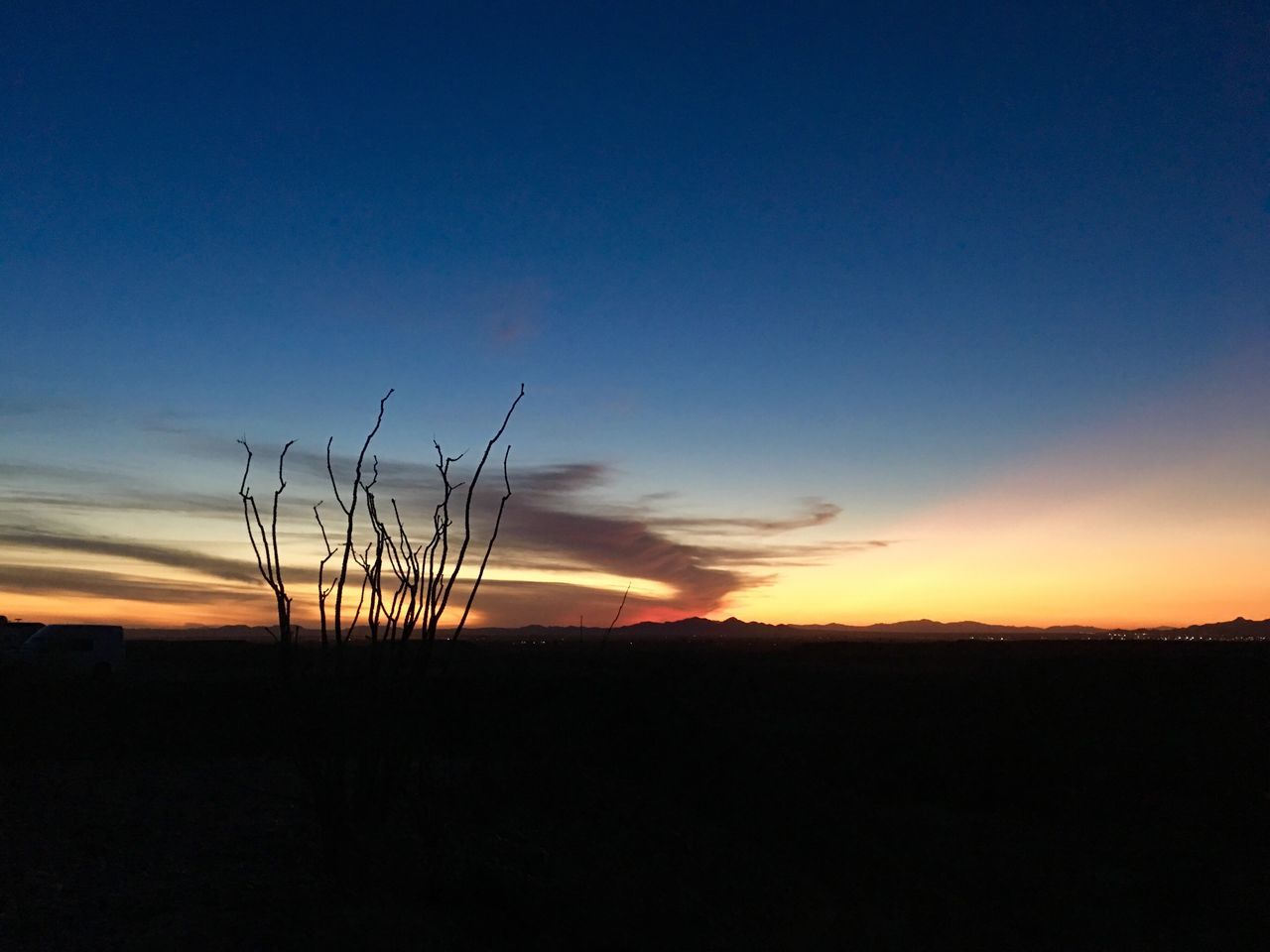 sunset, nature, tranquil scene, beauty in nature, silhouette, tranquility, scenics, field, growth, landscape, copy space, plant, no people, outdoors, sky, blue, rural scene, agriculture, grass, tree, day