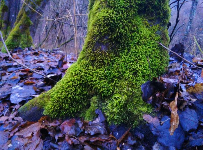 Mossy Tree Moss Beauty In Nature No People Outdoors Nature