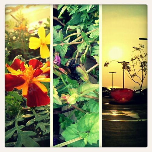 Sometimes you just have to stop and take a look around you. =) Bee Plants Kona Sunsets Lowes Flowers
