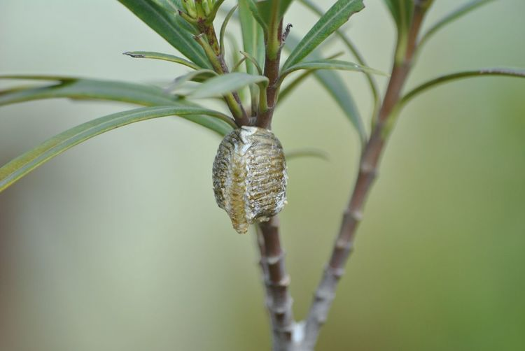 Close-up of lizard on plant