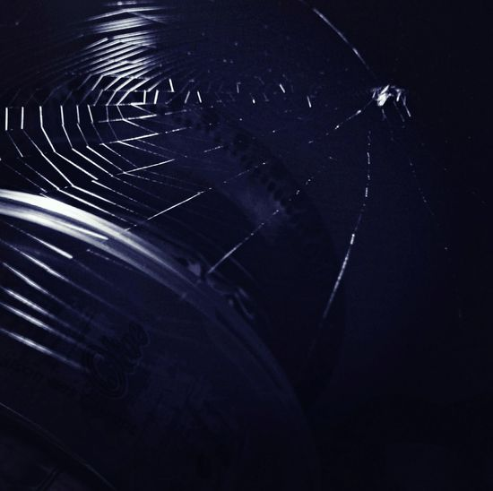 All Things Come To Those Who Can Wait..! Spider Web