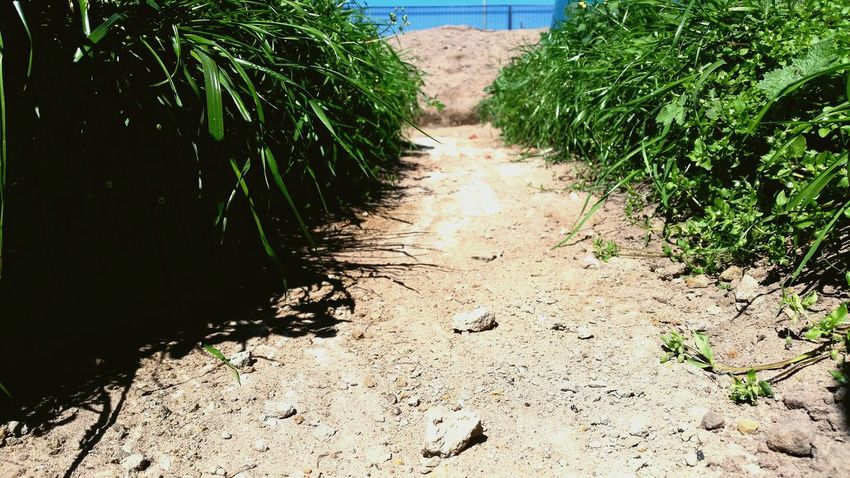Plant The Way Forward Growth Footpath Nature Outdoors Day Tranquility Narrow Beauty In Nature Green Color Botany Diminishing Perspective Summer Plant Life Tranquil Scene Non-urban Scene Solitude Scenics Trenches House Low Angle View
