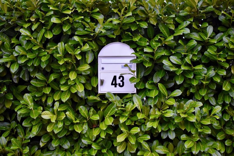 Close-up of mailbox amidst plants