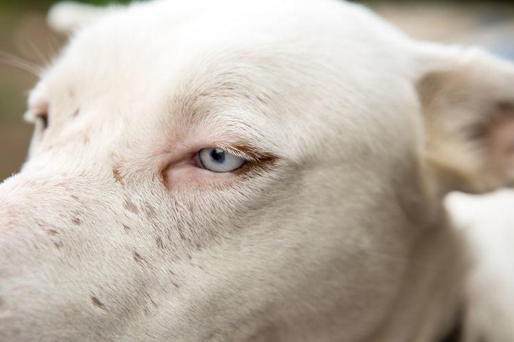 """Luna"" 😘 EyeEm Gallery EyeEm Animal Lover EyeEm Best Shots Albino Husky Canarias Blue Eyes EyeEm Selects Pets Portrait Dog Close-up Animal Eye The Portraitist - 2018 EyeEm Awards"