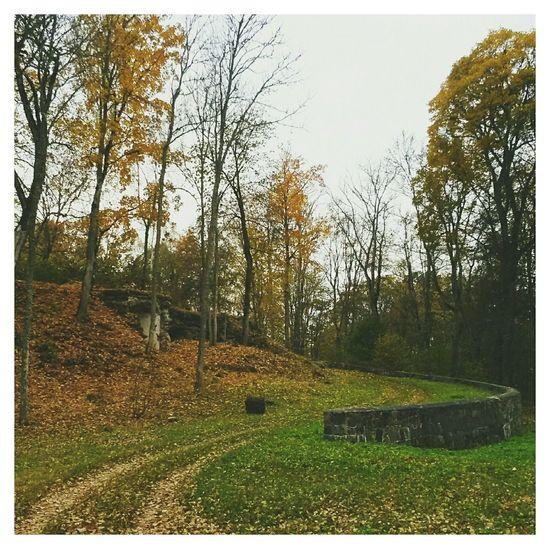краски осени Autumn Colors осень Fall Autumn EyeEm VSCO Latvia латвия