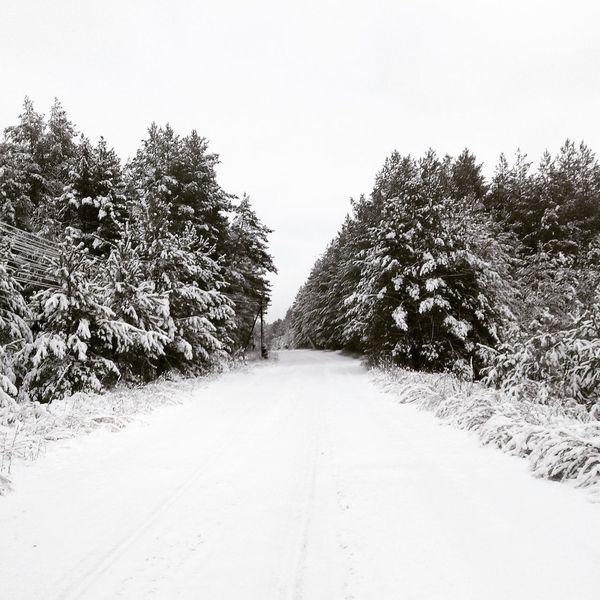 зима Snow Природа Nature Красоты природы Russia Русскаязима Forest Nature_collection EyeEm Nature Lover