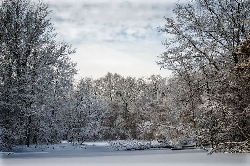 Faded and Frozen. Clouds Clouds And Sky Colors Cold It's Cold Outside Season  Showcase: January Snow Tranquil Scene Trees Winter