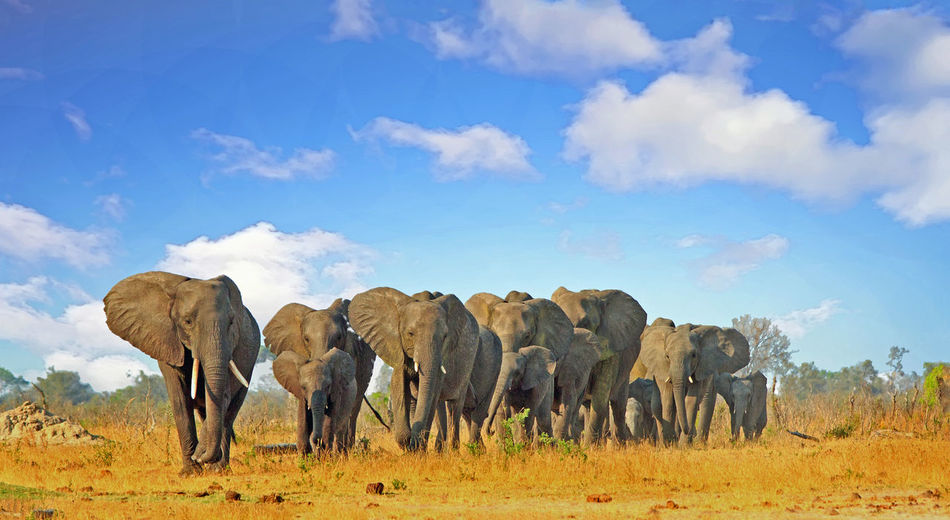 Big Five Animals Animal Mammal Animal Themes Sky Cloud - Sky Group Of Animals Landscape No People Nature Day Animal Wildlife Animal Family Animals In The Wild Beauty In Nature