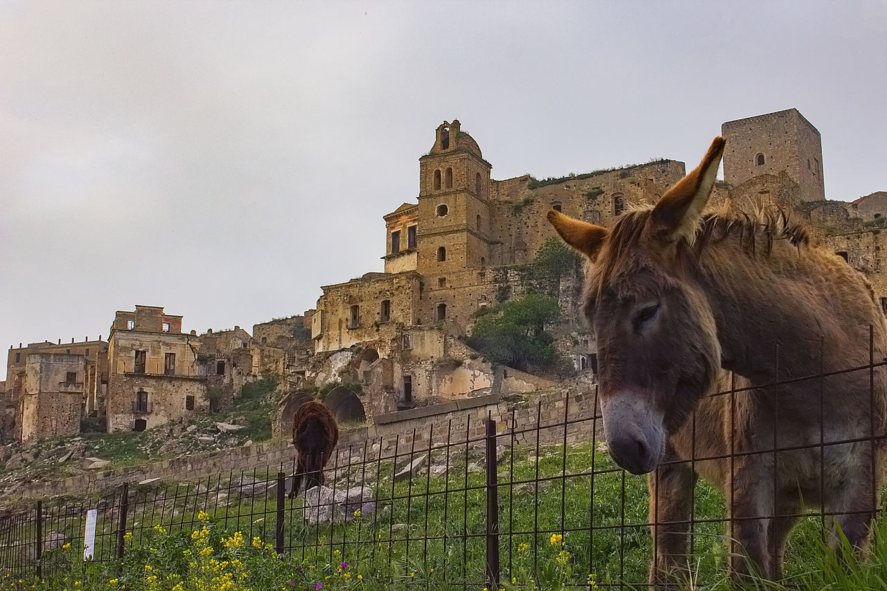 built structure, architecture, building exterior, animal, mammal, animal themes, sky, animal wildlife, domestic animals, domestic, livestock, building, pets, nature, vertebrate, history, no people, group of animals, horse, the past, outdoors, herbivorous, animal head