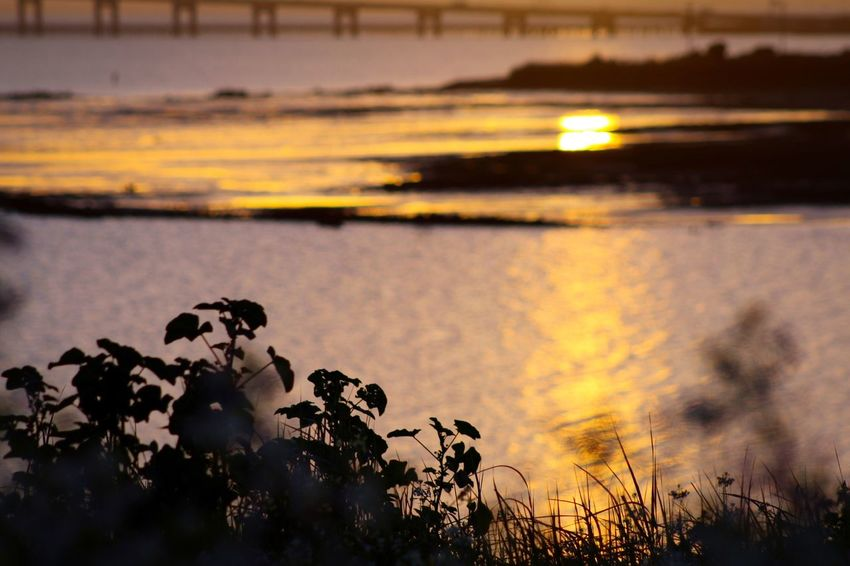Morning Check This Out Bridges Light And Shadow Sunrise Sunrise_Collection Beauty In Nature San Mateo Bridge Eyemphotography EyeEm Gallery Eye4photography