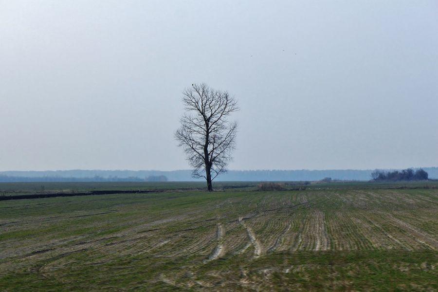 Agriculture Baum Day Farm Feld Field Landscape Nature No People Outdoors Sky Tree Ukraine