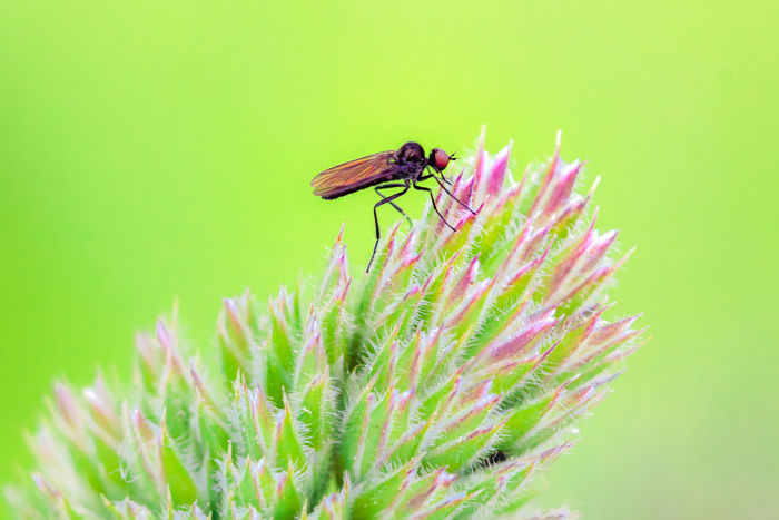 Close-up Fly - Insect Focus On Foreground Fragility Green Green Color Insect Macro Nature Outdoors Plant