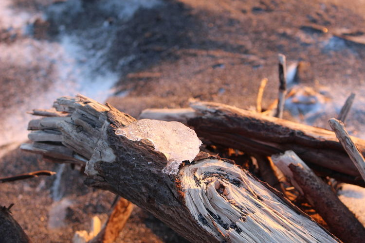Close-up of wood on log in field