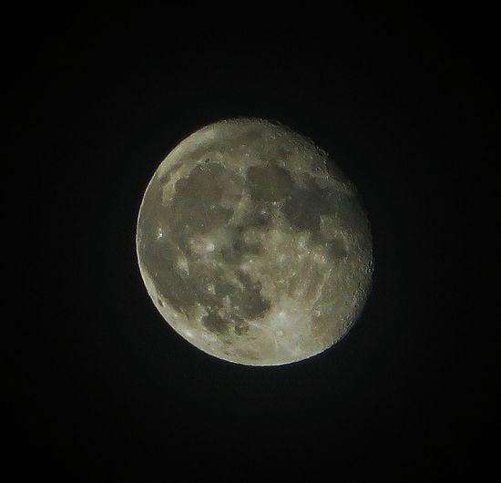Barking at the moon. Handheld. EyeEm Best Shots Eye4photography Moon Taking Photos