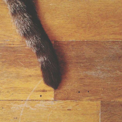 Cat Wood Photo
