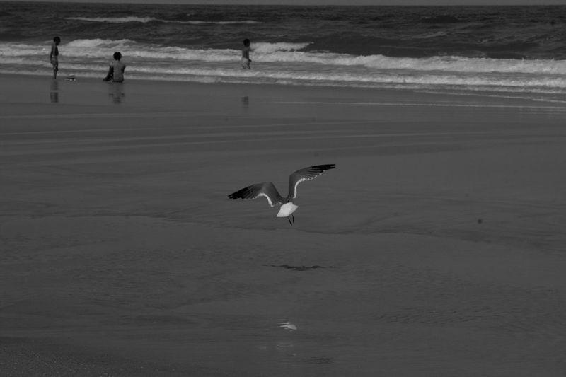 Bird flying over sea shore