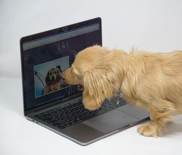 View of a dog looking at camera