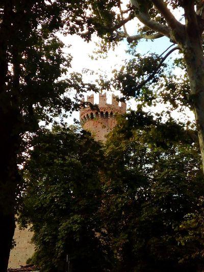 Medioevo tra gli albero🏰🌳 Ivrea, (TO) #architecture #architettura #castle  #castello #castellomedievale #medioevo #château #alcázar #ivrea #canavese #piemonte #italy Outdoors Day No People Low Angle View Nature