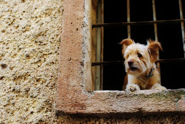 Portrait of a dog against wall