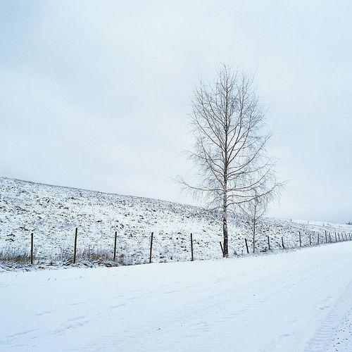 White winterday. Winter Nature Trees Tree_collection  Landscape Nature_collection Landscape_Collection White Nocolours