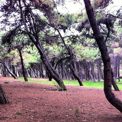 Instagood Morning Health Pine Coolpics Running Bakirkoy Istanbul