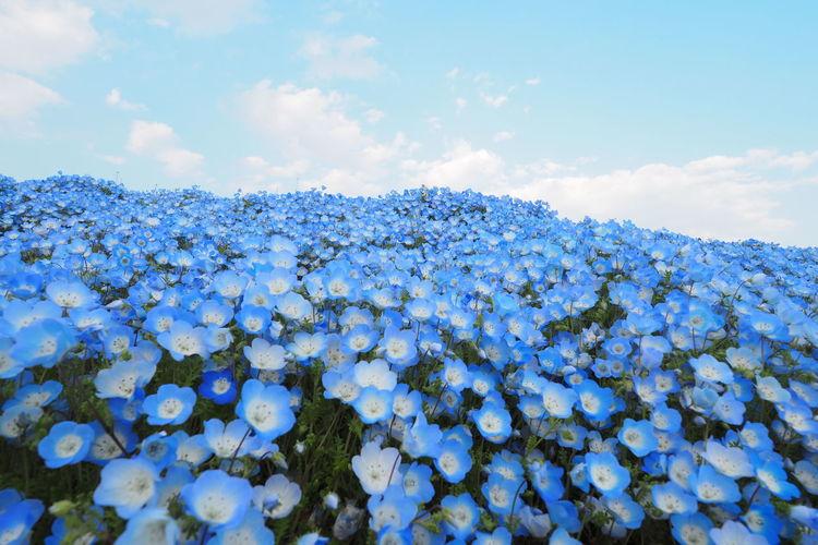 Blue flower sea