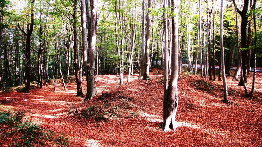 Orman Doğa Dogal Yeşil Kemerburgaz Istanbul Sonbahar Yaprakdokumu Fotography