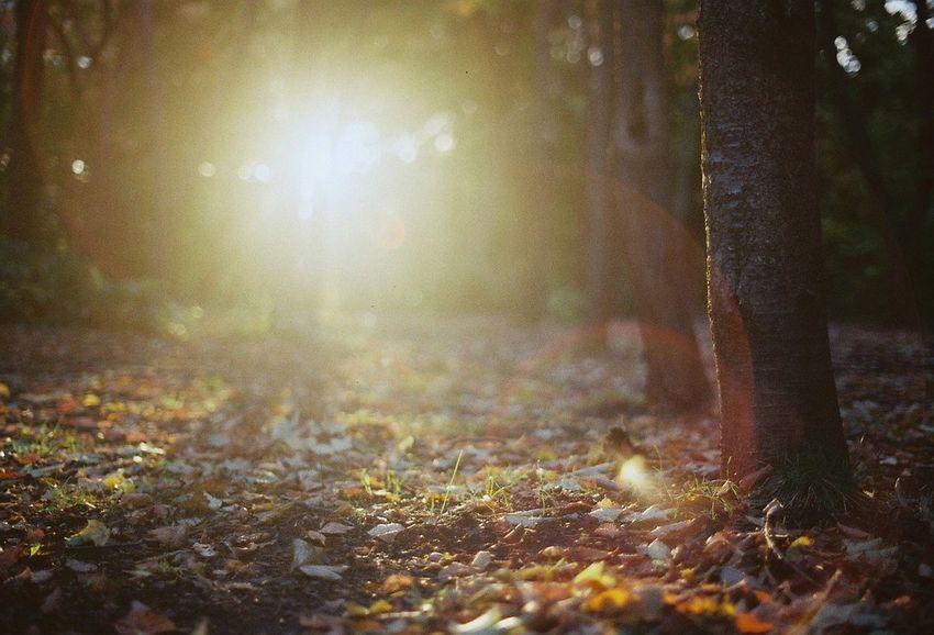 Autumn Colors Autumn Filmphotography 35mm Film Film Photo Eyemphotography Camera Japan