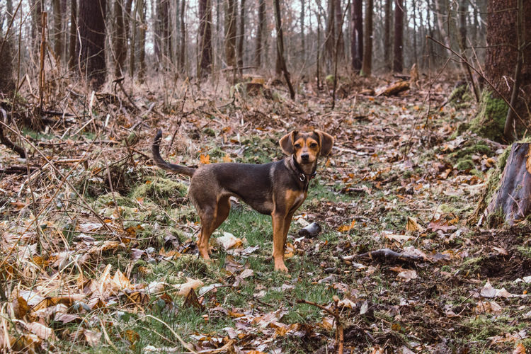 Portrait of dog on field in forest