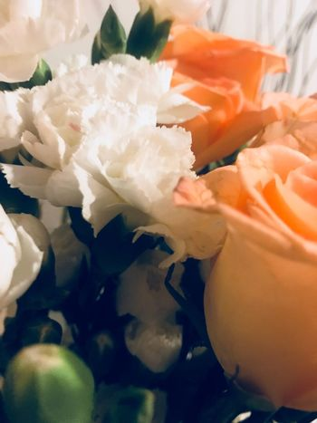 Carnation White Peach Roses Freshness Flower Still Life No People Indoors  Petal Close-up Fragility Flower Head