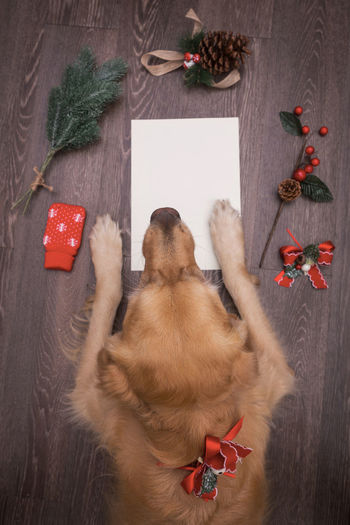 Christmas Christmas Letter Writing Animal Themes Christmas Christmas Decoration Christmas Tree Day Dog Domestic Animals Gift Indoors  Letter Mammal No People One Animal Pets Red Wish Writable