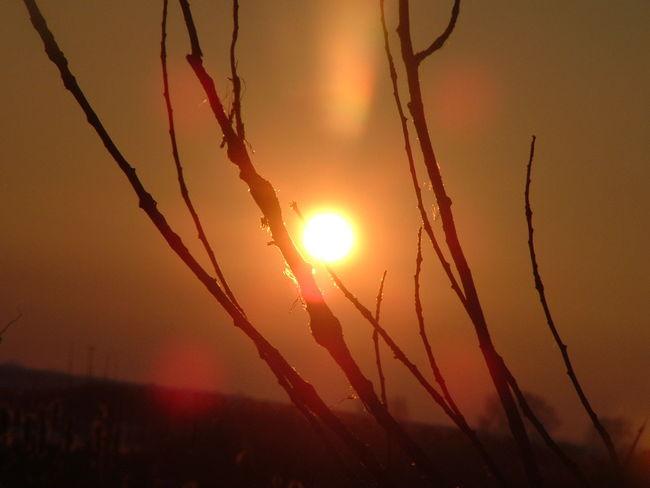 Sun Tree Orange Sunset Beautiful Sunset Check It Out Taking Photo Look Like Fire Sky Fire