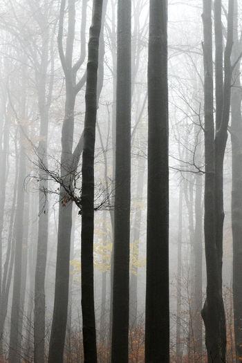 Minimalism Tree