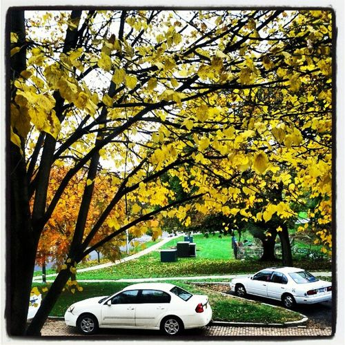 The Autumn view out of our Apartment window. Fallcolors LeavesTurningColor LeavesFalling BrickRoad