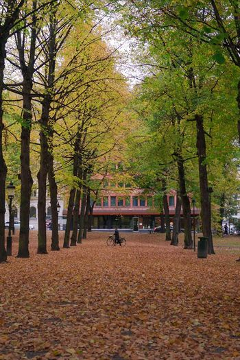 Nofilter Streetphotography Autumn Leaf Colorful Season  Tree Park Humlegården Stockholm, Sweden Sony FE 35mm F2.8