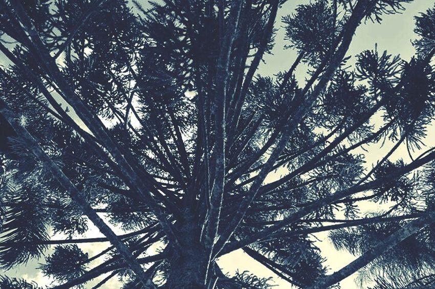 Geometric Shapes Pinheiro Natureza Pinhão Check This Out Hello World Geometry