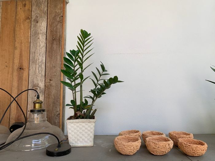 Plant Indoors  Potted Plant Food And Drink No People Table Freshness Nature Container Wall - Building Feature Growth Food Home Interior Still Life Day Vase Domestic Room Bottle Leaf Houseplant Glass